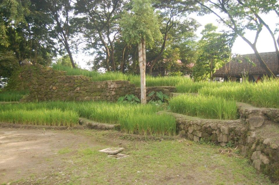 Ifugao Rice Terraces, banawe rice terraces, nayon pilipino